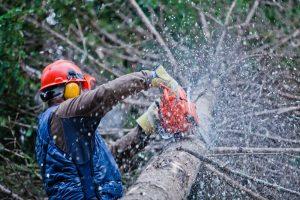 Local-Tree-Service.jpg